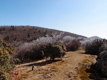 三峰山、八丁平の霧氷