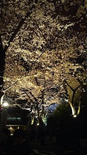sakurazaka201604.jpg